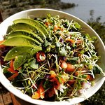 Homegrown organic sprout salad