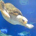 Photo de Birch Aquarium at Scripps