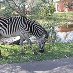 Photo of AVANI Victoria Falls Resort