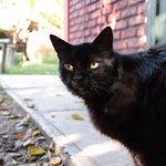 """Nuestra mascota. Ella llama """"Negrita"""""""