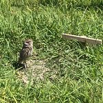 View of the towers from the gulf. Burrowing owl by the guard gate.