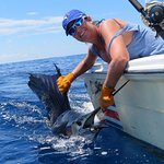 another sailfish