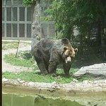 One of the grizzly bears