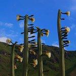 San Pedro, mystical Inka's sacred cactus