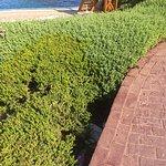 תמונה של Moevenpick Resort & Spa Tala Bay Aqaba