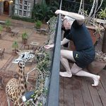 Feeding the giraffes from our private balcony