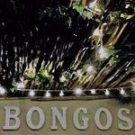 Bongos New Deck