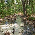 Hidden Waters Preserve