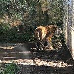 Foto de Zoo Natura Parc