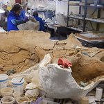 Archaeologists working on dinosaur fossils in the lab