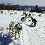 Foto de Dog Sled Rides of Winter Park
