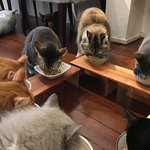 Cats having their lunch