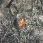 Turquoise Bay Dive & Beach Resort Photo