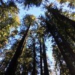 Photo de Redwood National Park