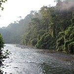 Jungle Tribe Foto