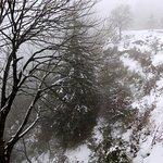 Naked white trees
