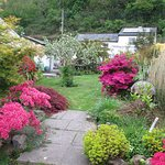 Garden in the springtime