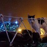 cat on bridge