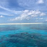 Photo of Michaelmas Cay
