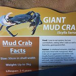 Guide and tour experience as part of Catch A Crab