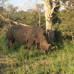 Foto de Arathusa Safari Lodge