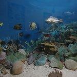 Seychelles Natural History Museum Foto