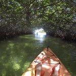 Kayak under mangrove canopy