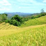 Candapdapan Rice Terraces