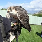 Birds of Prey not far away!