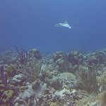 A ray Invisibles dive site. SSkills to shot a good picture, from my Videographer course at Div O
