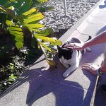 The Hotel's resident cat in the Hotels' garden