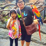 you can take a picture with some animal, such as this beautiful parrot