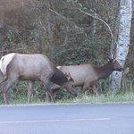 Photo of Fort Stevens State Park