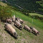 Unsere Freilandschweinezucht