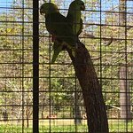 Some of the animals you can see at Monkey Park