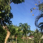 Photo of The Village Coconut Island