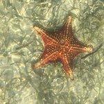Star fish point