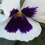 Les fleurs... crocodile  du jardin d'essai