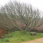 Bel arbre et lande de fougères.