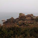 Genêts et rochers de granite rose.