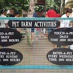 Schedule for pet farm