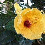 flower in your door step
