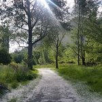 Walking track from Hotel to Arrowtown alongside the stream