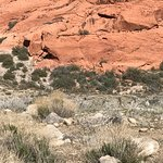 Beautiful Red Rock Canyon! Lots of opportunity to take pictures!