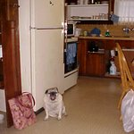 Kitchen area, with a full sized stove, oven, and refrigerator. (Toby not included)