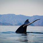 Foto de Loreto Bay National Marine Park
