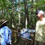Guide explaining cypress strand habitat