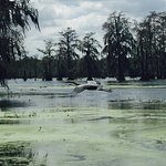 Photo de Lake Martin Rookery