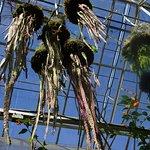 Hanging plants, greenhouse