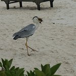 Photo of Royal Island Resort & Spa